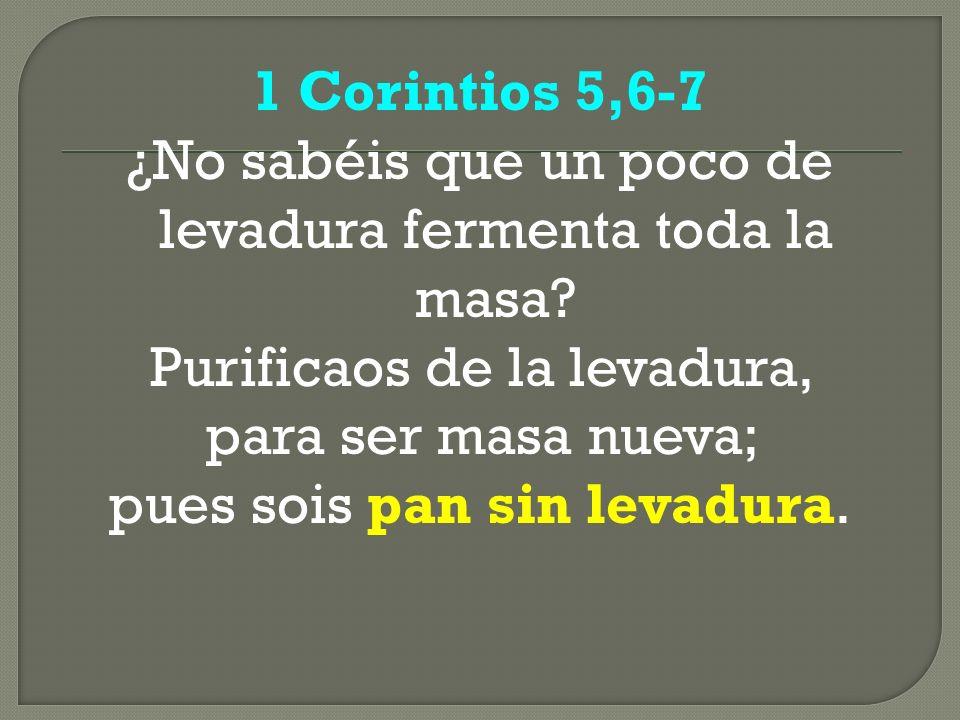 1 Corintios 5,6-7 ¿No sabéis que un poco de levadura fermenta toda la masa? Purificaos de la levadura, para ser masa nueva; pues sois pan sin levadura