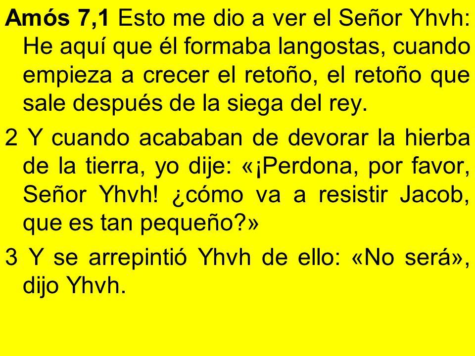 Amós 7,1 Esto me dio a ver el Señor Yhvh: He aquí que él formaba langostas, cuando empieza a crecer el retoño, el retoño que sale después de la siega