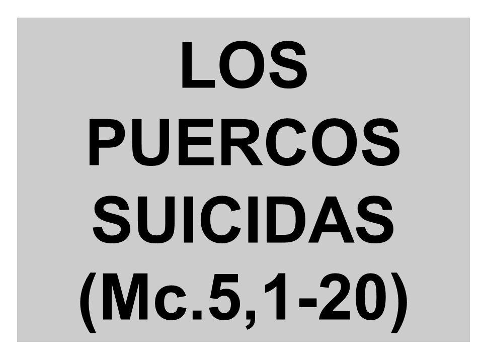 LOS PUERCOS SUICIDAS (Mc.5,1-20)