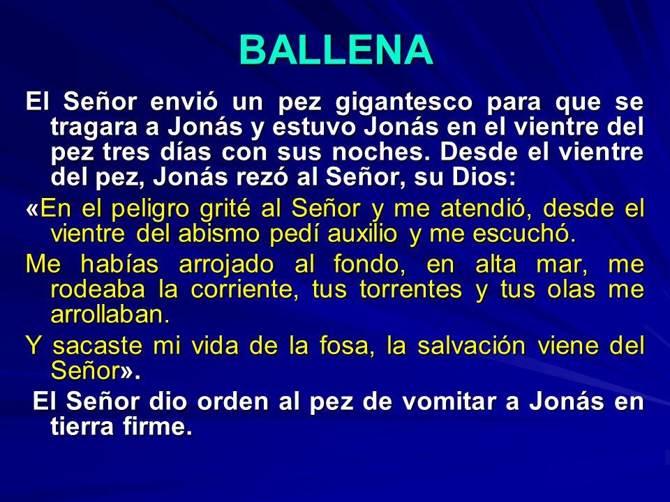 BALLENA El Señor envió un pez gigantesco para que se tragara a Jonás y estuvo Jonás en el vientre del pez tres días con sus noches. Desde el vientre d