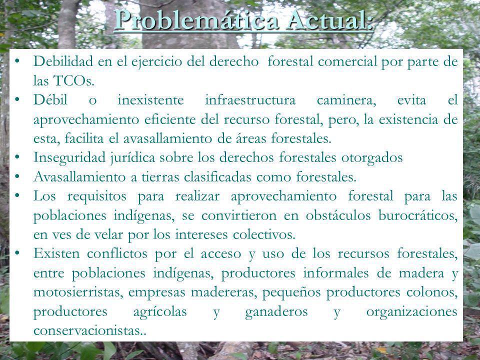 Debilidad en el ejercicio del derecho forestal comercial por parte de las TCOs. Débil o inexistente infraestructura caminera, evita el aprovechamiento