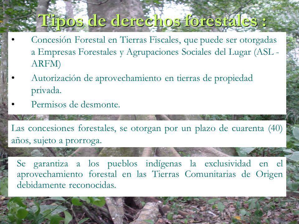 Tipos de derechos forestales : Concesión Forestal en Tierras Fiscales, que puede ser otorgadas a Empresas Forestales y Agrupaciones Sociales del Lugar