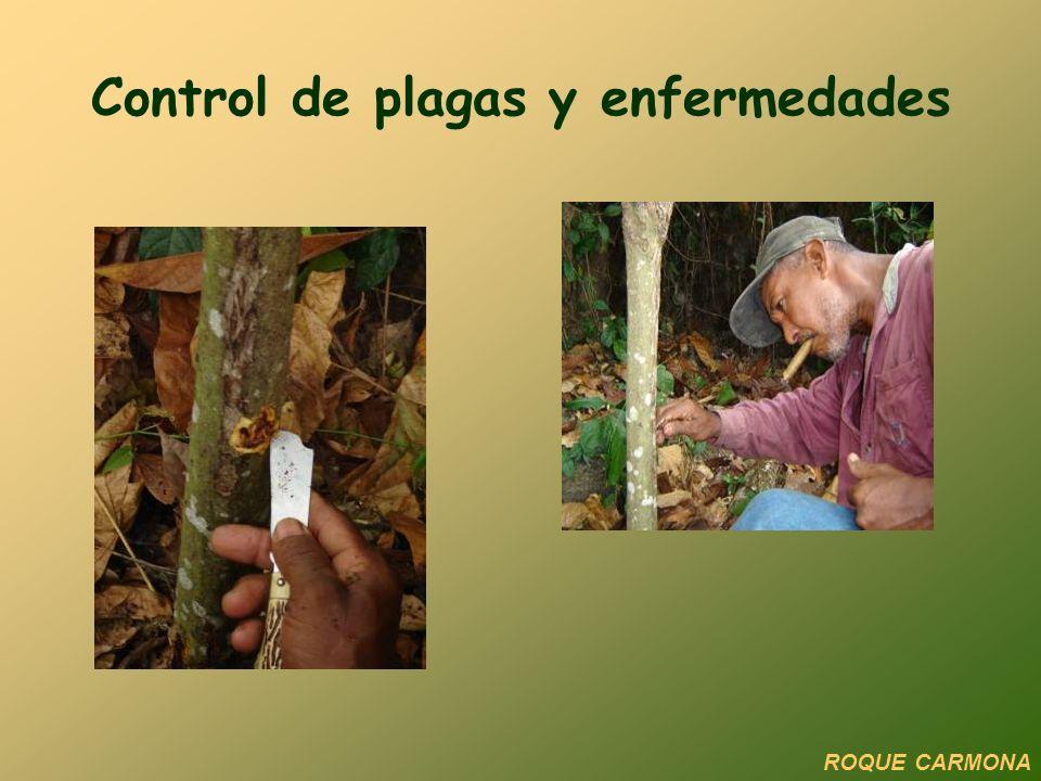 Control de plagas y enfermedades ROQUE CARMONA