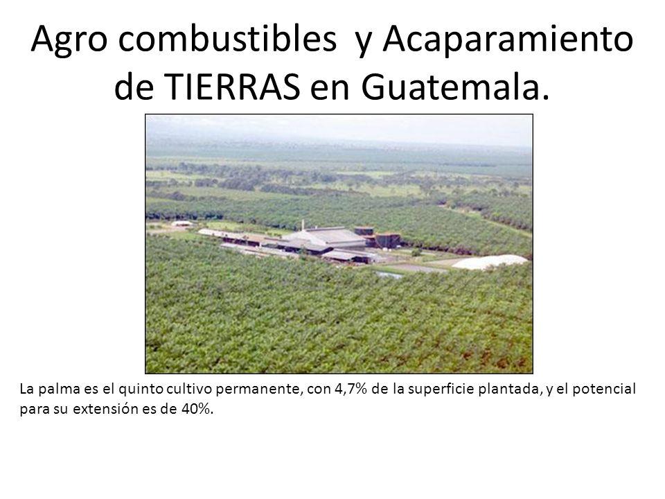 Agro combustibles y Acaparamiento de TIERRAS en Guatemala.