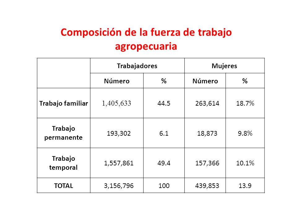 TrabajadoresMujeres Número% % Trabajo familiar 1,405,633 44.5263,61418.7% Trabajo permanente 193,3026.118,8739.8% Trabajo temporal 1,557,86149.4157,36