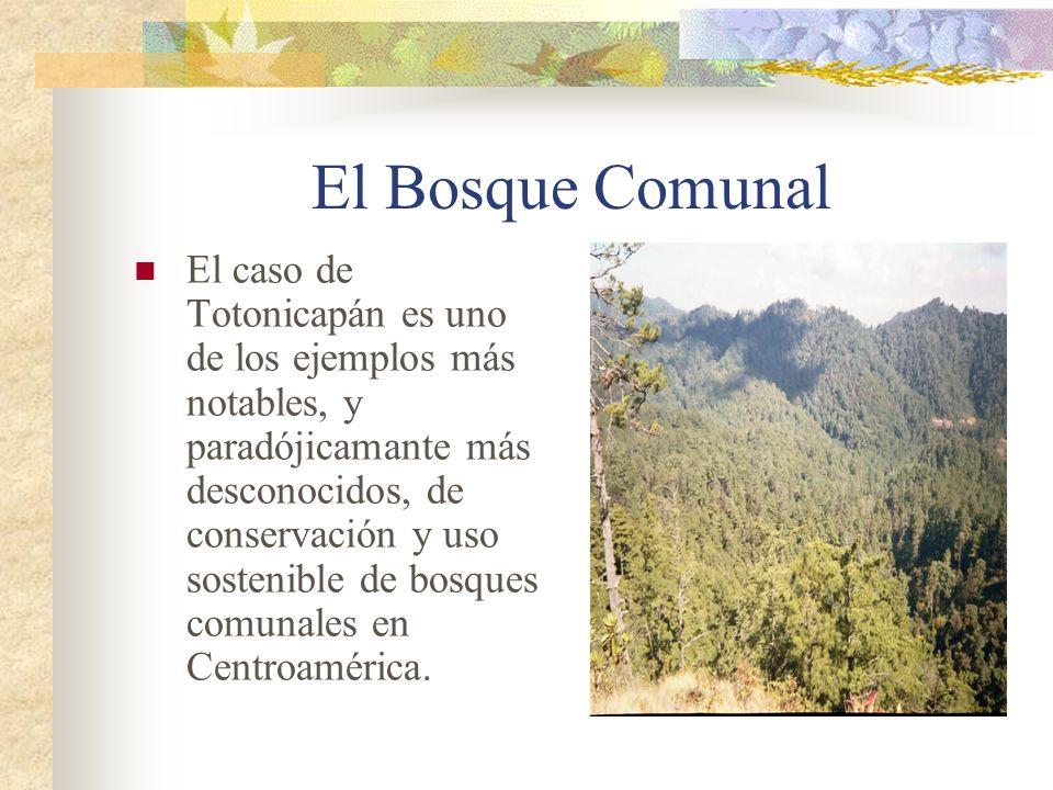 El Bosque Comunal El caso de Totonicapán es uno de los ejemplos más notables, y paradójicamante más desconocidos, de conservación y uso sostenible de