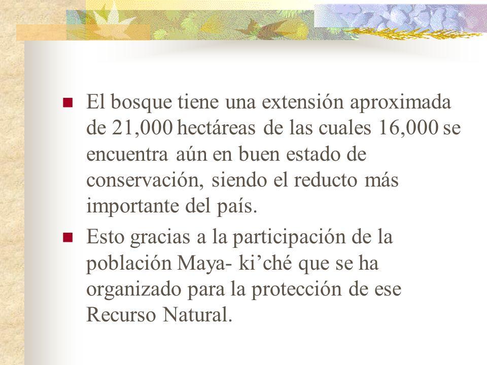 El bosque tiene una extensión aproximada de 21,000 hectáreas de las cuales 16,000 se encuentra aún en buen estado de conservación, siendo el reducto m