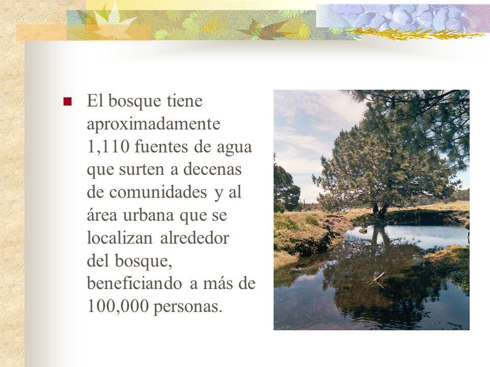 El bosque tiene aproximadamente 1,110 fuentes de agua que surten a decenas de comunidades y al área urbana que se localizan alrededor del bosque, bene