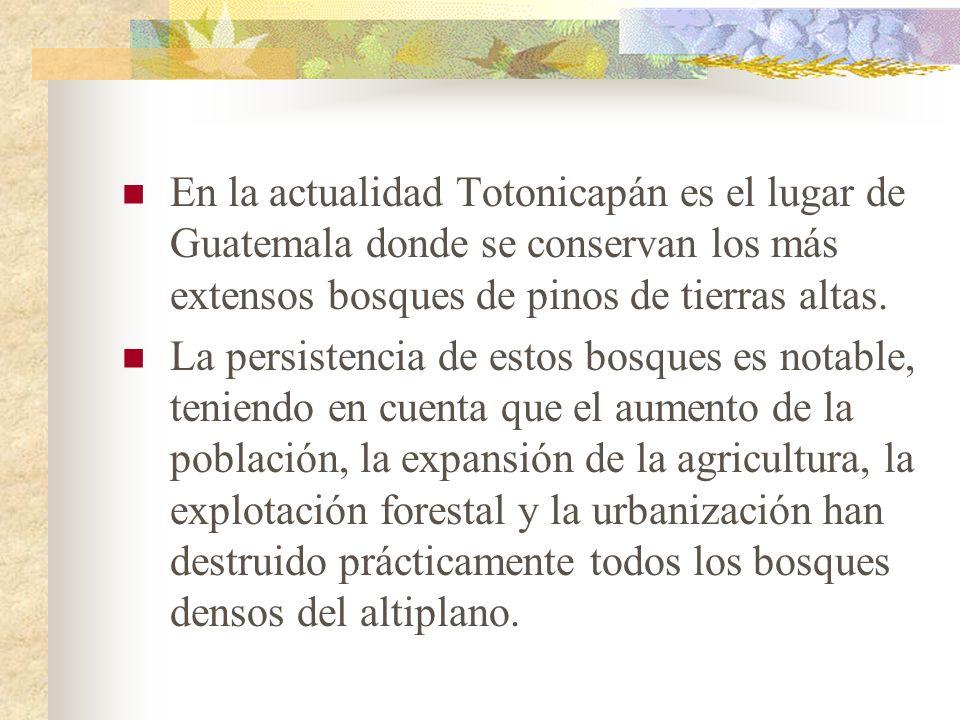 En la actualidad Totonicapán es el lugar de Guatemala donde se conservan los más extensos bosques de pinos de tierras altas. La persistencia de estos