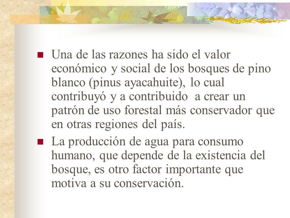 Una de las razones ha sido el valor económico y social de los bosques de pino blanco (pinus ayacahuite), lo cual contribuyó y a contribuido a crear un