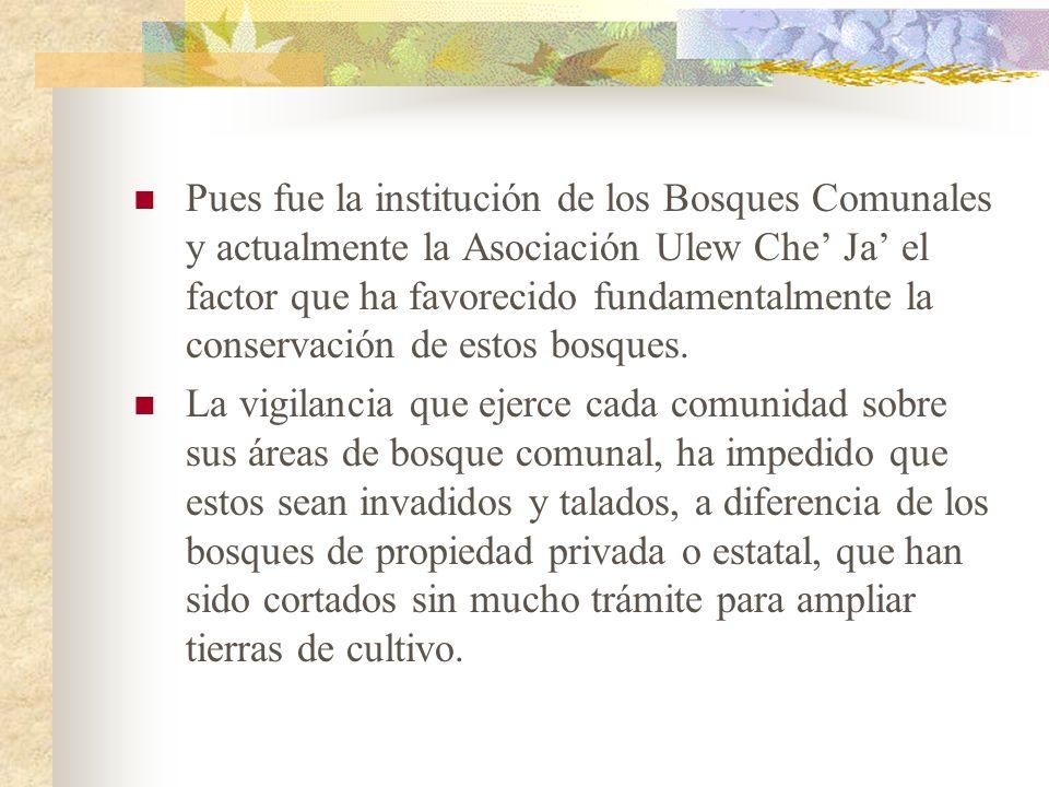 Pues fue la institución de los Bosques Comunales y actualmente la Asociación Ulew Che Ja el factor que ha favorecido fundamentalmente la conservación
