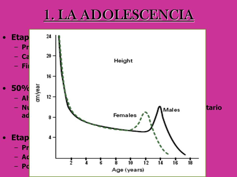 1. LA ADOLESCENCIA Etapa crítica –Primeros cambio físicos cese del crecimiento –Cambios de índole psicológica y social –Finaliza con la madurez de la