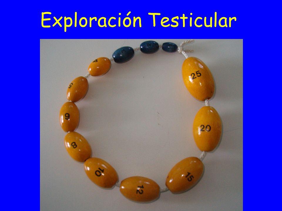 Exploración Testicular