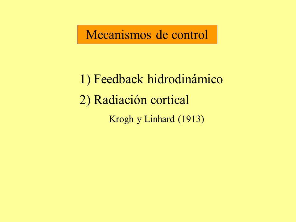 Mecanismos de control 1) Feedback hidrodinámico 2) Radiación cortical Krogh y Linhard (1913)