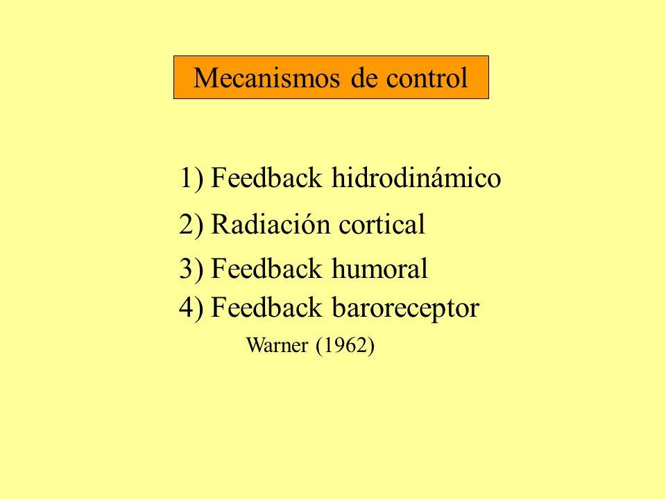 Mecanismos de control 1) Feedback hidrodinámico 2) Radiación cortical 3) Feedback humoral 4) Feedback baroreceptor Warner (1962)