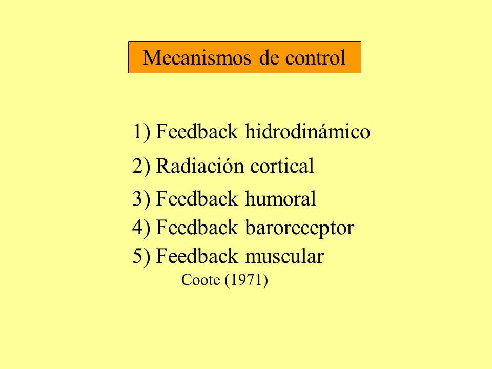 Mecanismos de control 1) Feedback hidrodinámico 2) Radiación cortical 3) Feedback humoral 4) Feedback baroreceptor 5) Feedback muscular Coote (1971)