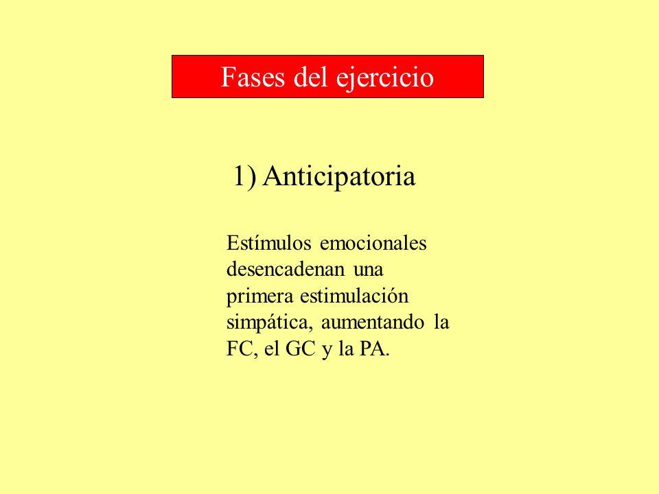1) Anticipatoria Fases del ejercicio Estímulos emocionales desencadenan una primera estimulación simpática, aumentando la FC, el GC y la PA.