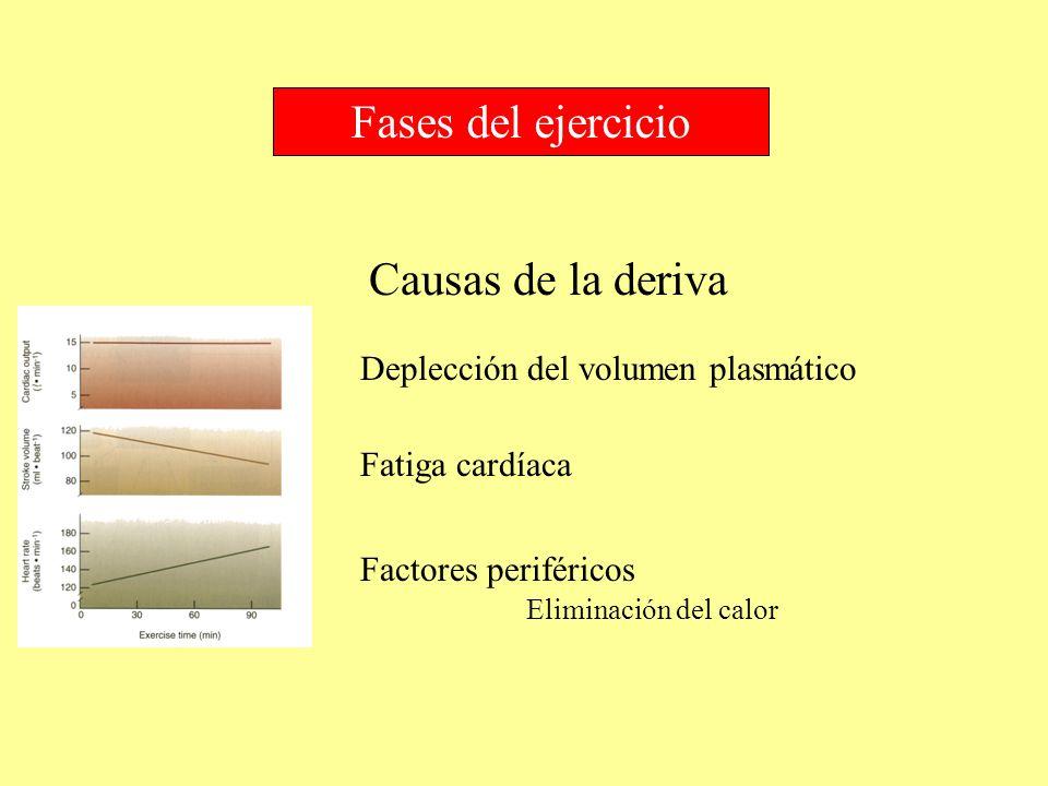 Fases del ejercicio Deplección del volumen plasmático Fatiga cardíaca Factores periféricos Eliminación del calor Causas de la deriva