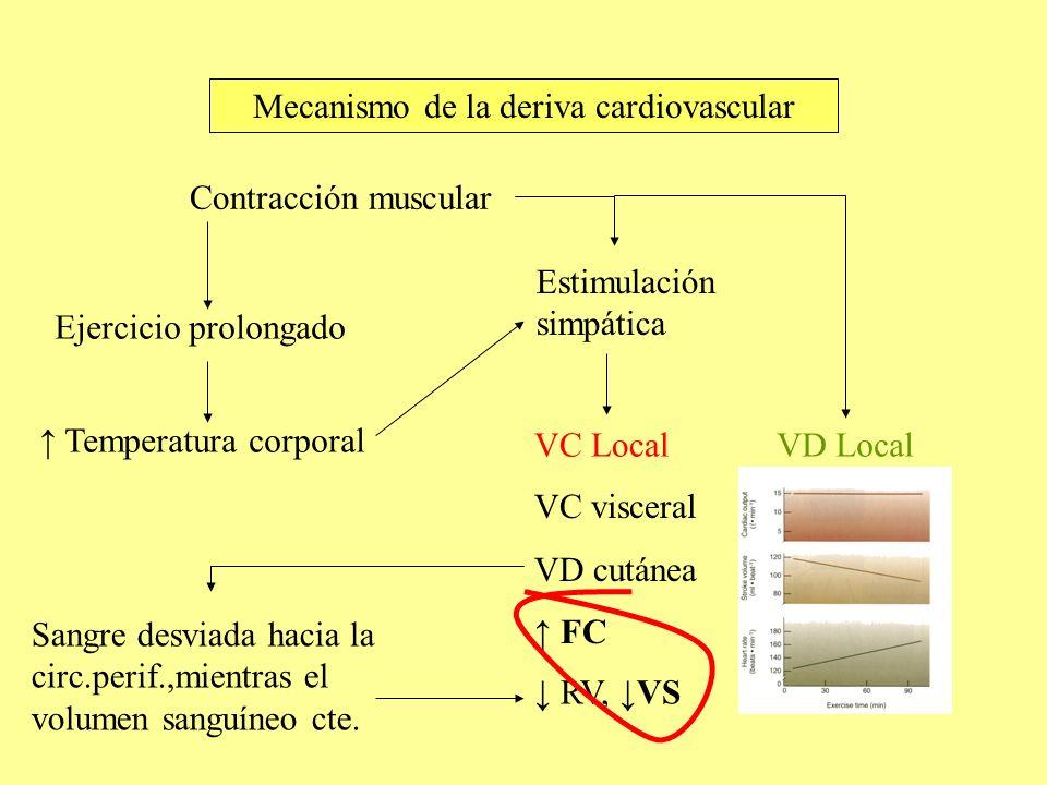 Mecanismo de la deriva cardiovascular Ejercicio prolongado Temperatura corporal Estimulación simpática Contracción muscular VC LocalVD Local Sangre de