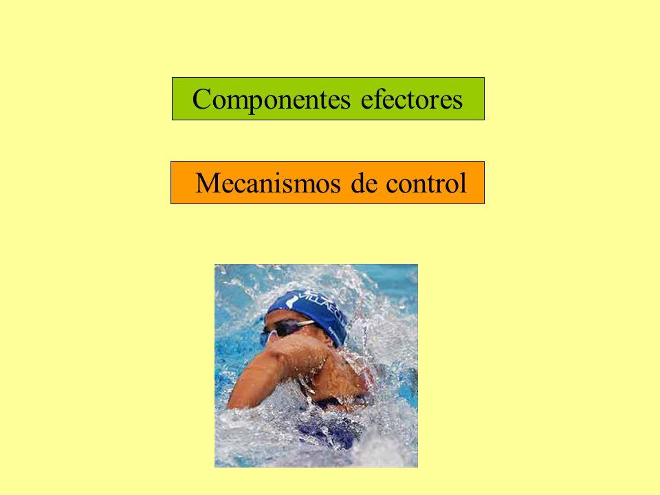 Componentes efectores Mecanismos de control
