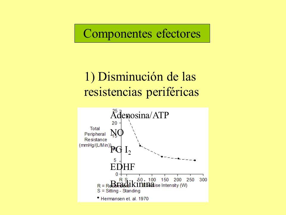 Componentes efectores 1) Disminución de las resistencias periféricas Adenosina/ATP NO PG I 2 EDHF Bradikinina