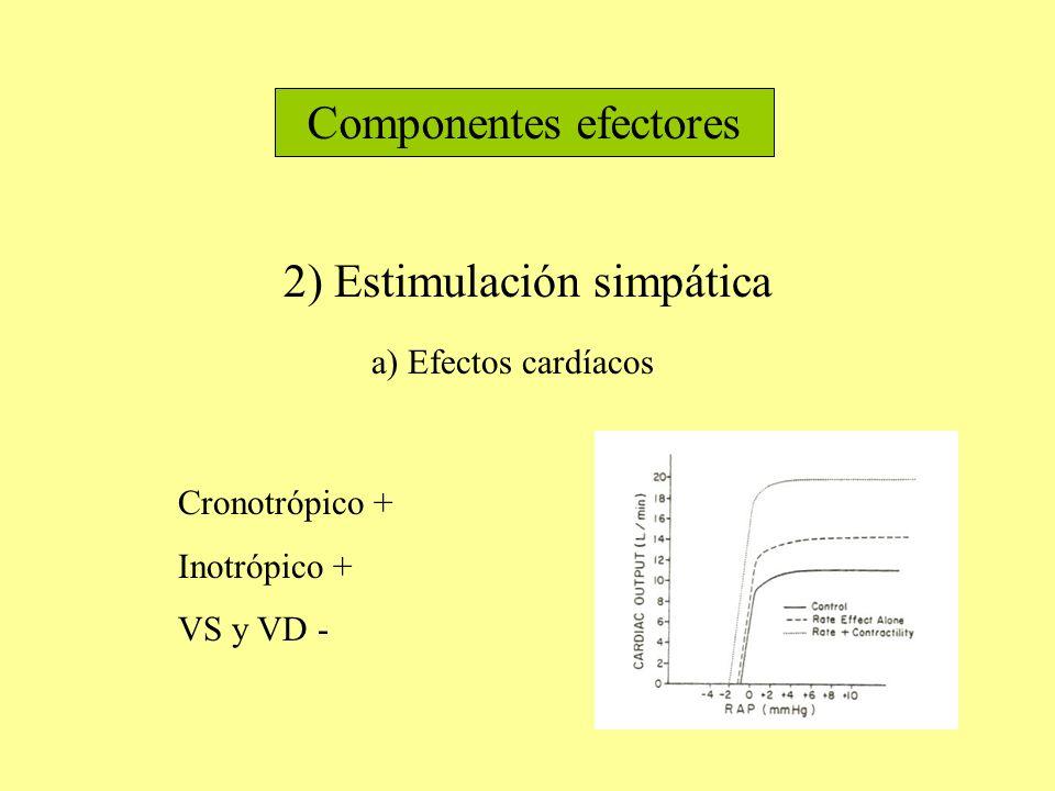 Componentes efectores 2) Estimulación simpática a) Efectos cardíacos Cronotrópico + Inotrópico + VS y VD -