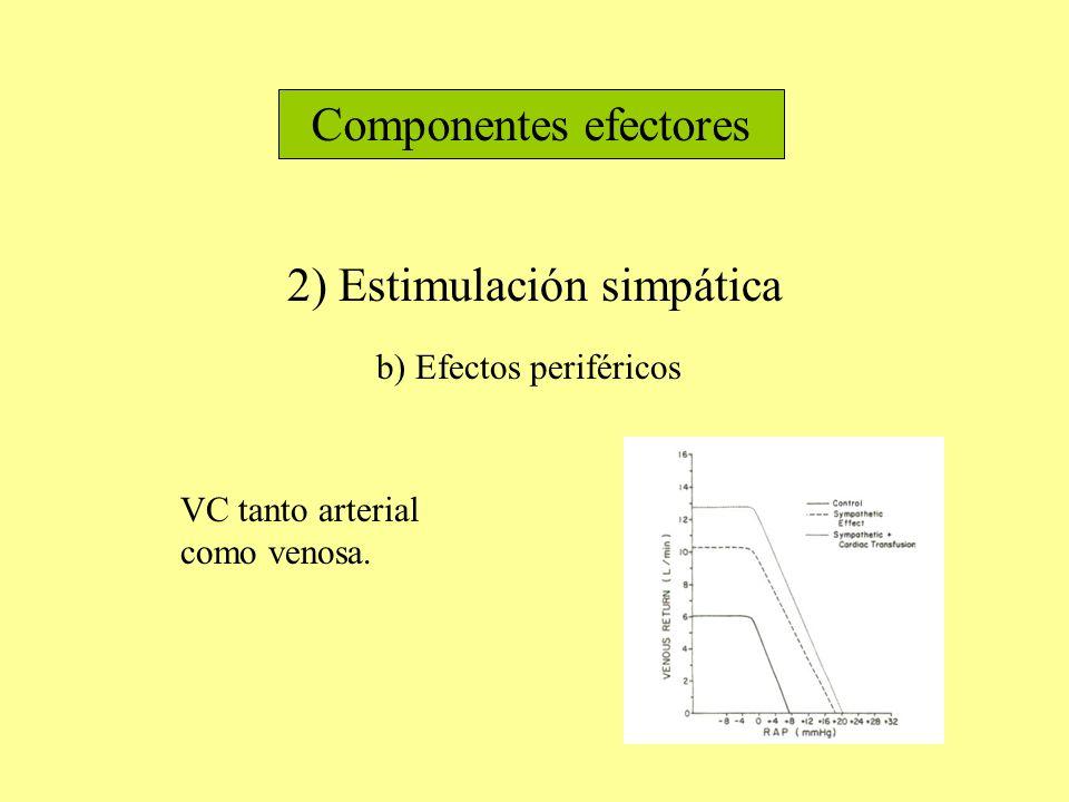 Componentes efectores 2) Estimulación simpática b) Efectos periféricos VC tanto arterial como venosa.