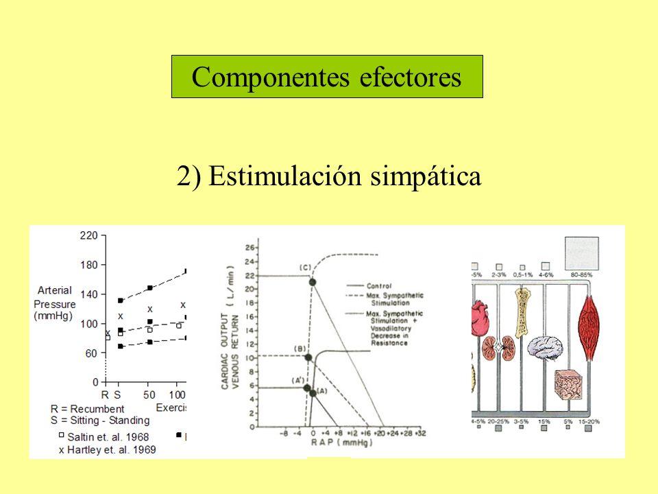 Componentes efectores 2) Estimulación simpática