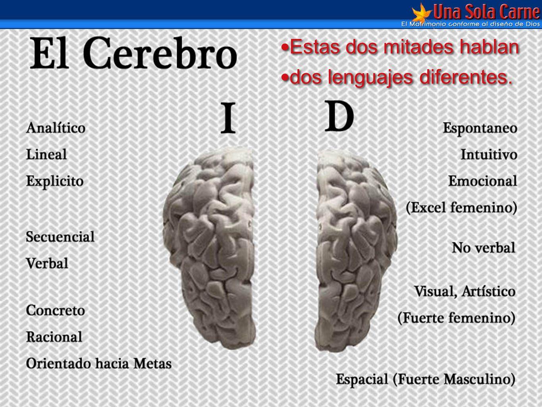 Diferentes por Diseño pagina 127 Estas dos mitades hablan dos lenguajes diferentes. Estas dos mitades hablan dos lenguajes diferentes.
