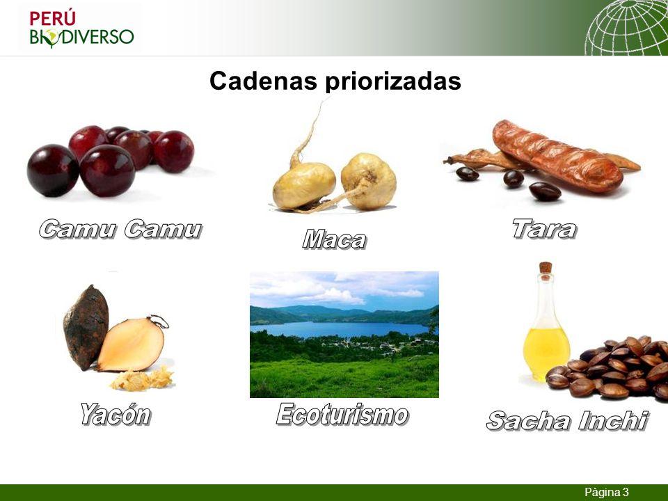 13.02.2014 Seite 3 Página 3 Cadenas priorizadas
