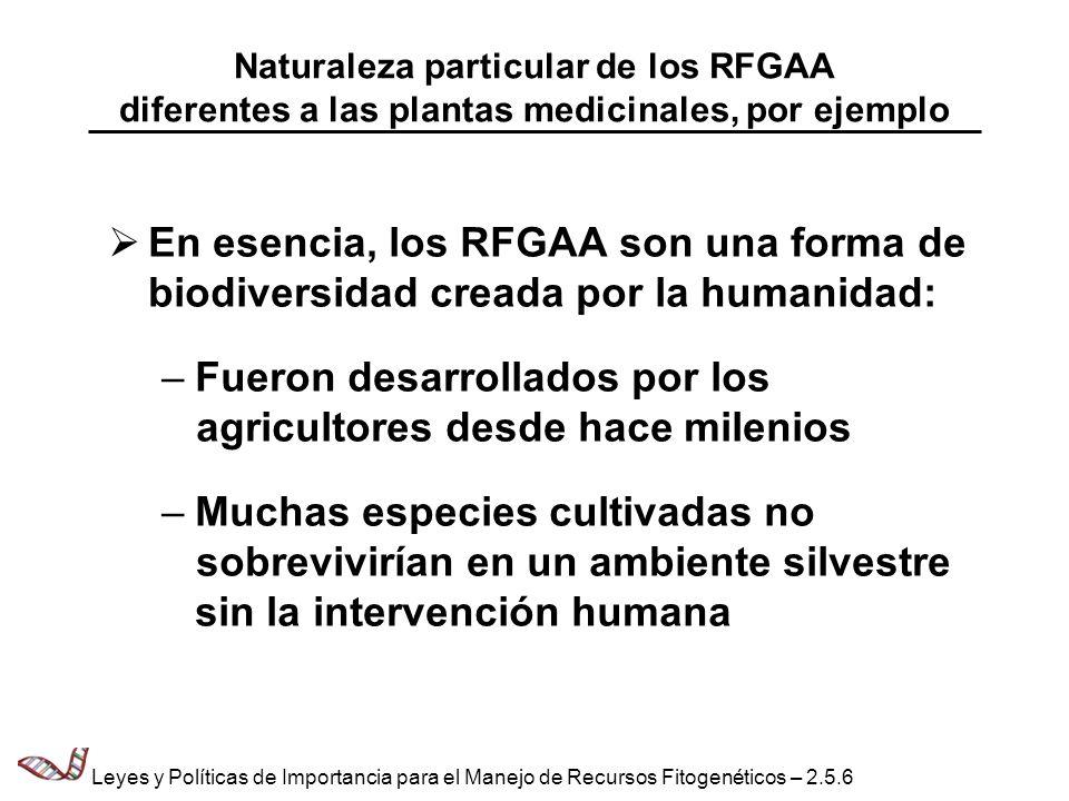 Valor de los RFGAA (1) El valor de los recursos genéticos agrícolas reside en la diversidad contenida en la especie cultivada, no en la especie como tal; es decir, en su resistencia (a factores adversos), en mantener el grado de productividad alcanzado Los recursos genéticos agrícolas siempre se han intercambiado libremente; entre otras razones, para preservar la diversidad genética intraespecífica No sólo se intercambian entre los agricultores, de una localidad a otra, sino también a nivel mundial, de un continente a otro Leyes y Políticas de Importancia para el Manejo de Recursos Fitogenéticos – 2.5.7