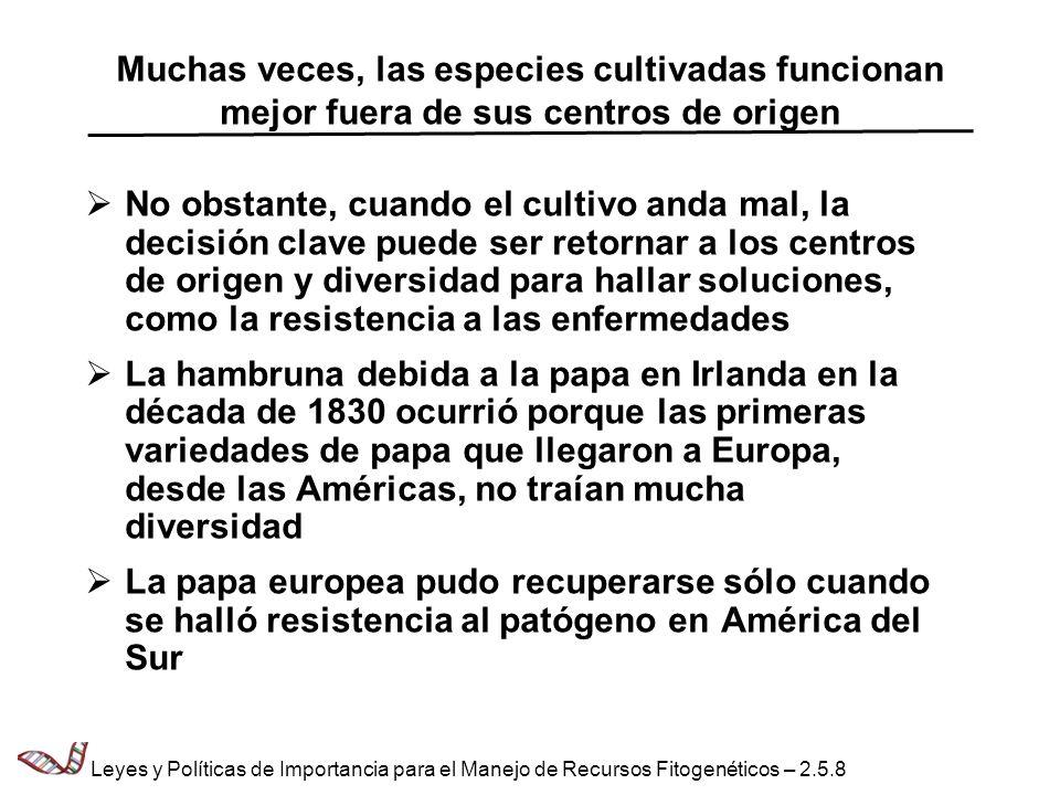 Centros de diversidad Norte América Girasol Arándano Alcachofa de Jerusalén América Central Maíz Yuca Phaseolus spp.