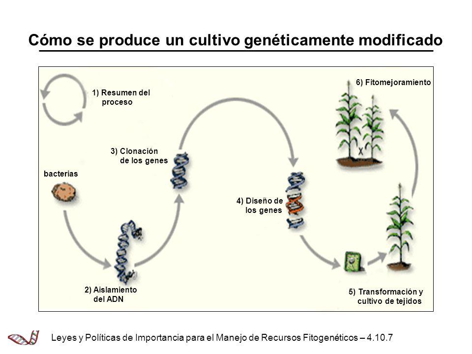 Cómo se produce un cultivo genéticamente modificado Leyes y Políticas de Importancia para el Manejo de Recursos Fitogenéticos – 4.10.7 6) Fitomejorami