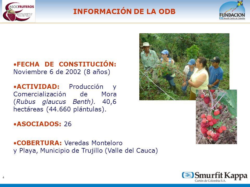 4 INFORMACIÓN DE LA ODB FECHA DE CONSTITUCIÓN: Noviembre 6 de 2002 (8 años) ACTIVIDAD: Producción y Comercialización de Mora (Rubus glaucus Benth). 40