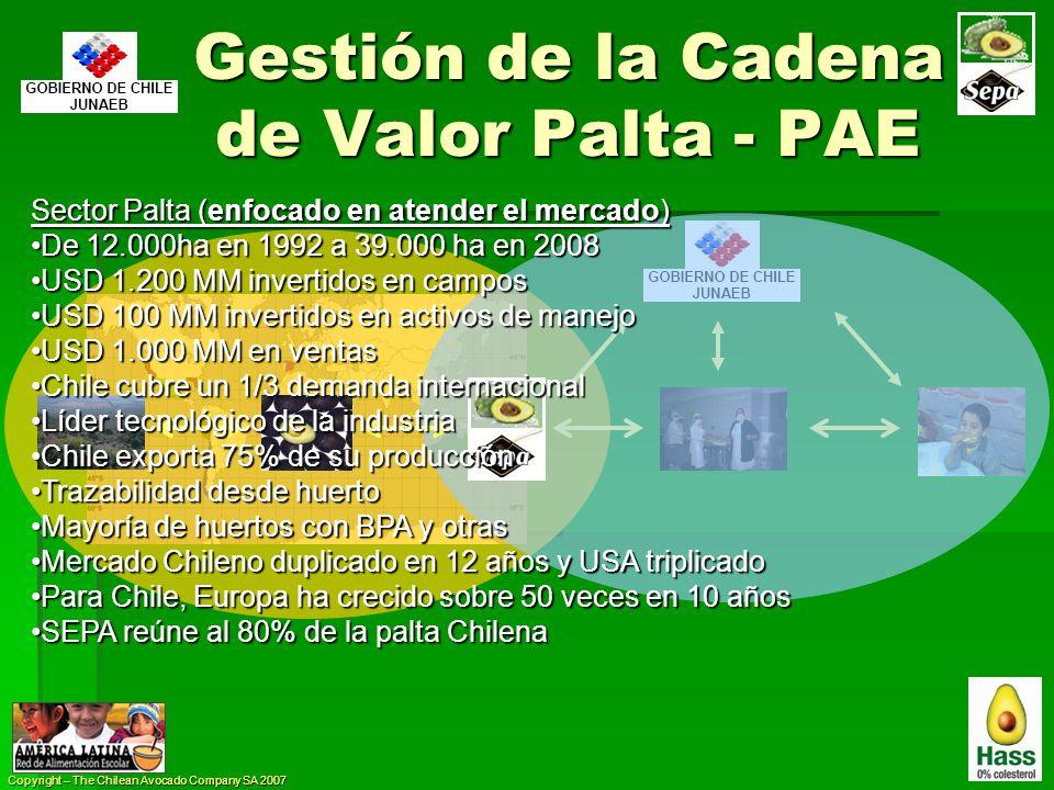 Copyright – The Chilean Avocado Company SA 2007 Gestión de la Cadena de Valor Palta - PAE Sector Palta (enfocado en atender el mercado) De 12.000ha en