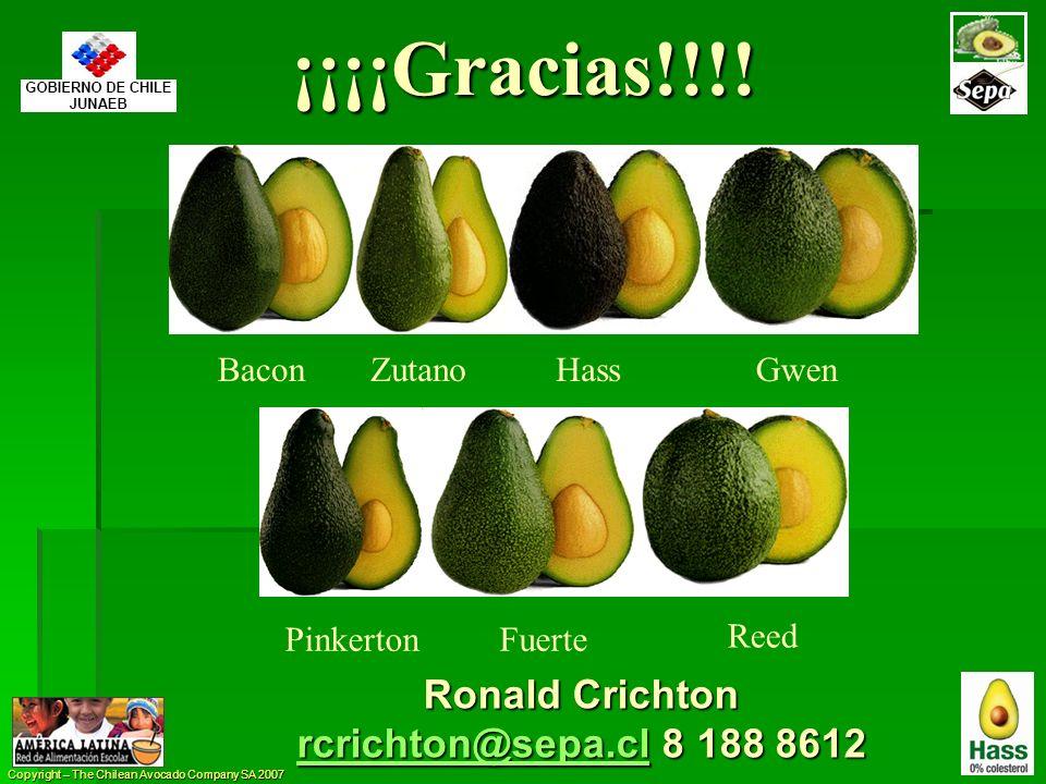 Copyright – The Chilean Avocado Company SA 2007 BaconZutanoHassGwen PinkertonFuerte Reed ¡¡¡¡Gracias!!!! Ronald Crichton rcrichton@sepa.clrcrichton@se