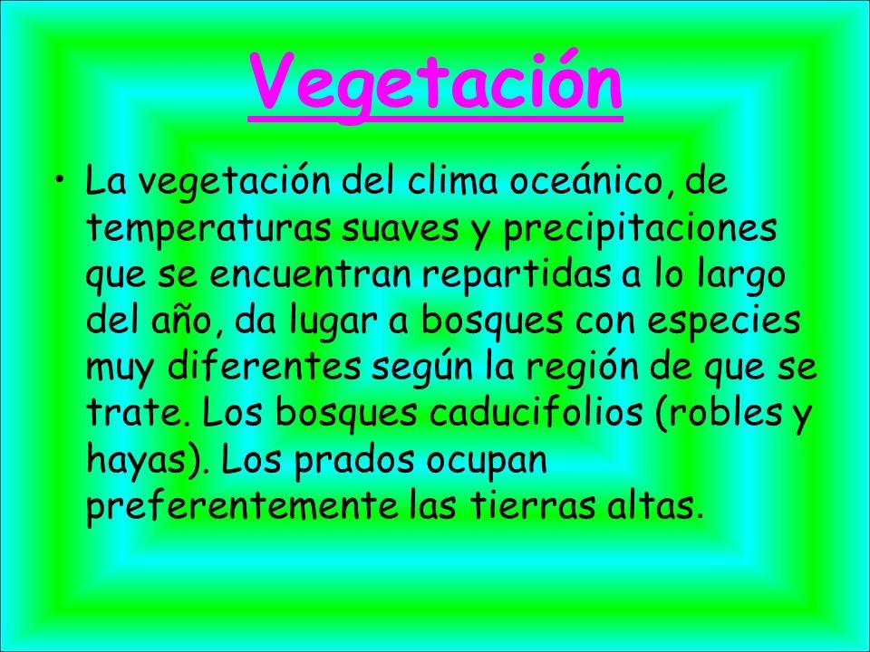 Vegetación La vegetación del clima oceánico, de temperaturas suaves y precipitaciones que se encuentran repartidas a lo largo del año, da lugar a bosq