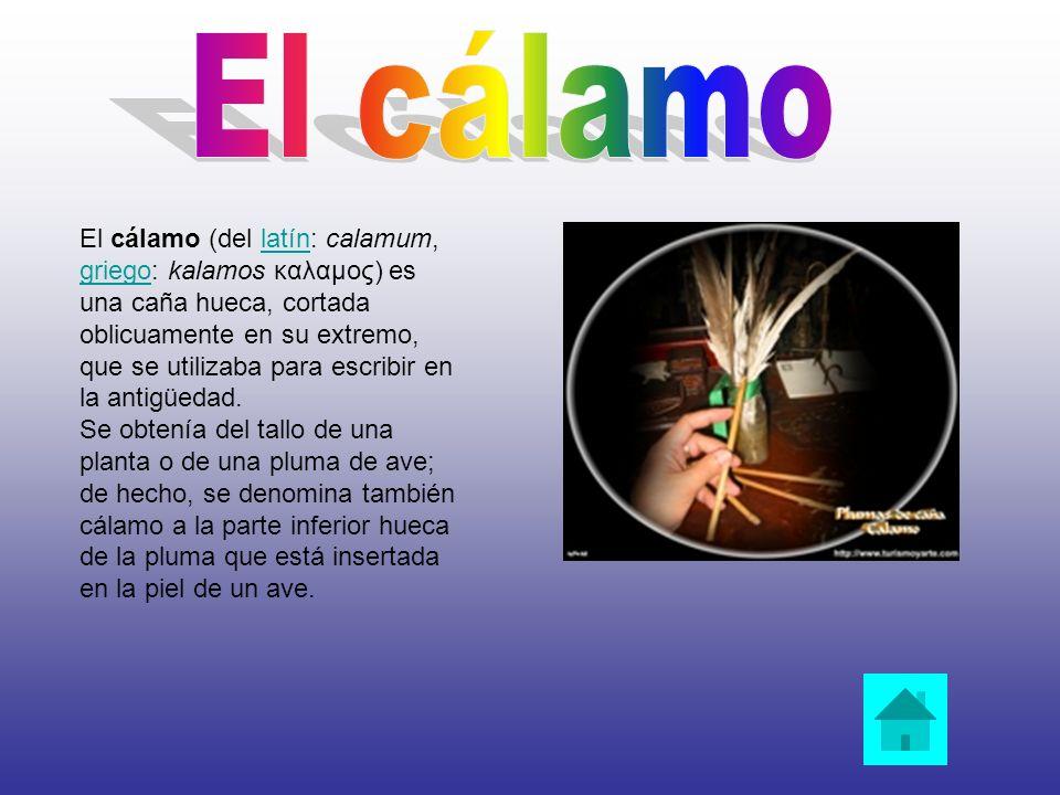 El cálamo (del latín: calamum, griego: kalamos καλαμος) es una caña hueca, cortada oblicuamente en su extremo, que se utilizaba para escribir en la an