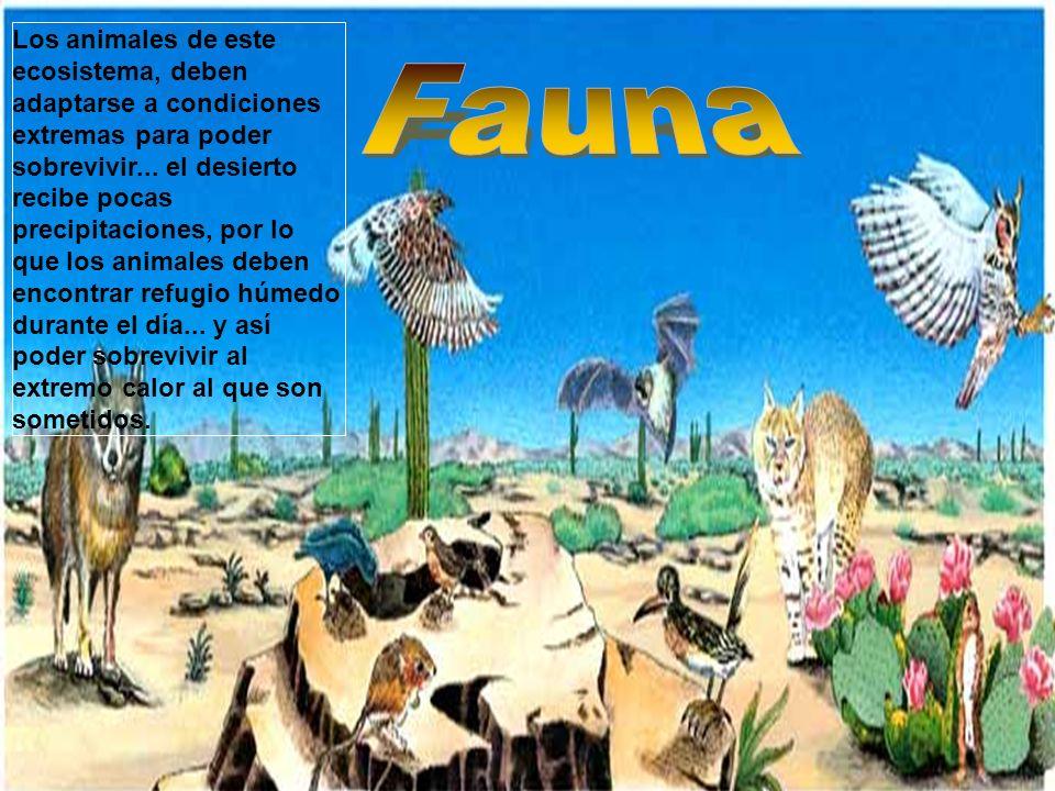 Los animales de este ecosistema, deben adaptarse a condiciones extremas para poder sobrevivir... el desierto recibe pocas precipitaciones, por lo que