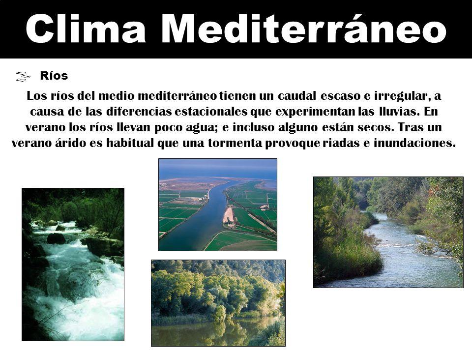 Clima Mediterráneo Ríos Los ríos del medio mediterráneo tienen un caudal escaso e irregular, a causa de las diferencias estacionales que experimentan