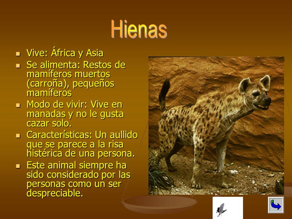 Vive: África y Asia Vive: África y Asia Se alimenta: Restos de mamíferos muertos (carroña), pequeños mamíferos Se alimenta: Restos de mamíferos muerto