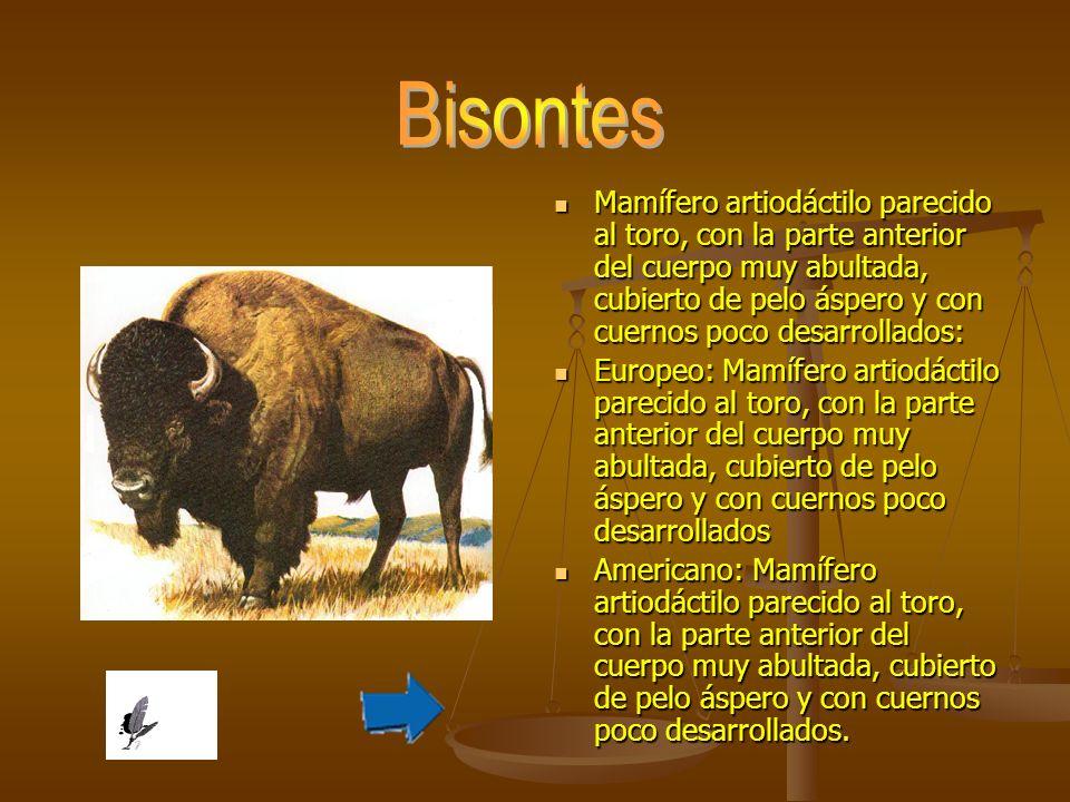Mamífero artiodáctilo parecido al toro, con la parte anterior del cuerpo muy abultada, cubierto de pelo áspero y con cuernos poco desarrollados: Europ