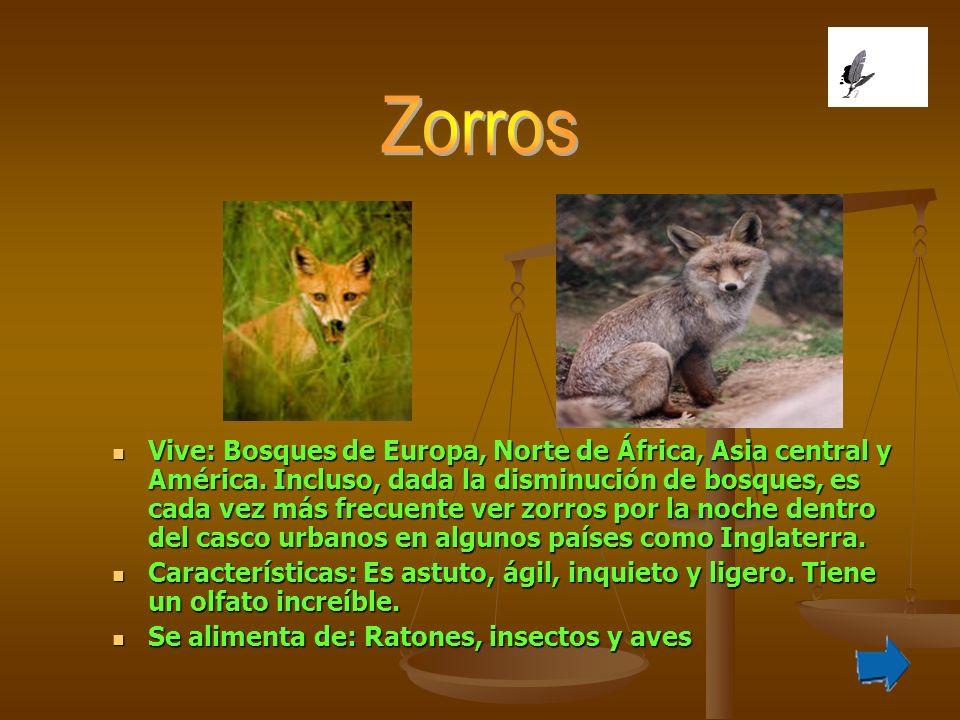 Vive: Bosques de Europa, Norte de África, Asia central y América. Incluso, dada la disminución de bosques, es cada vez más frecuente ver zorros por la
