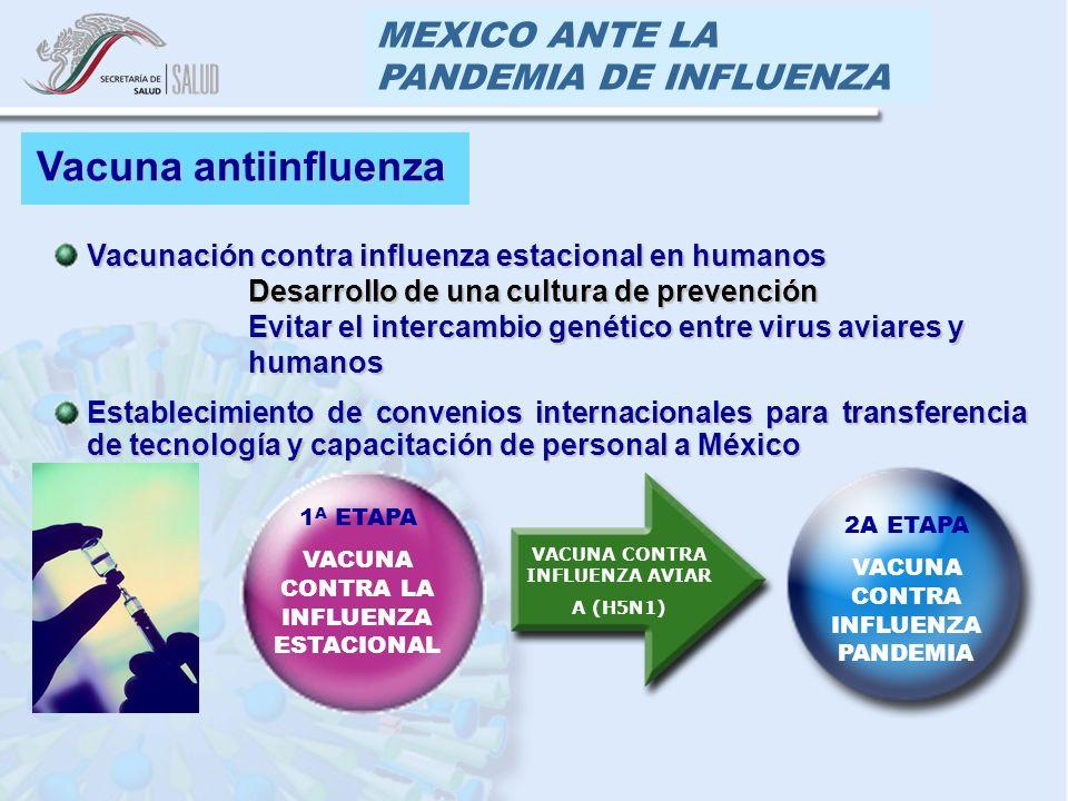 MEXICO ANTE LA PANDEMIA DE INFLUENZA Vacuna antiinfluenza Vacunación contra influenza estacional en humanos Desarrollo de una cultura de prevención Desarrollo de una cultura de prevención Evitar el intercambio genético entre virus aviares y humanos Evitar el intercambio genético entre virus aviares y humanos Establecimiento de convenios internacionales para transferencia de tecnología y capacitación de personal a México 1 A ETAPA VACUNA CONTRA LA INFLUENZA ESTACIONAL 2A ETAPA VACUNA CONTRA INFLUENZA PANDEMIA VACUNA CONTRA INFLUENZA AVIAR A (H5N1)