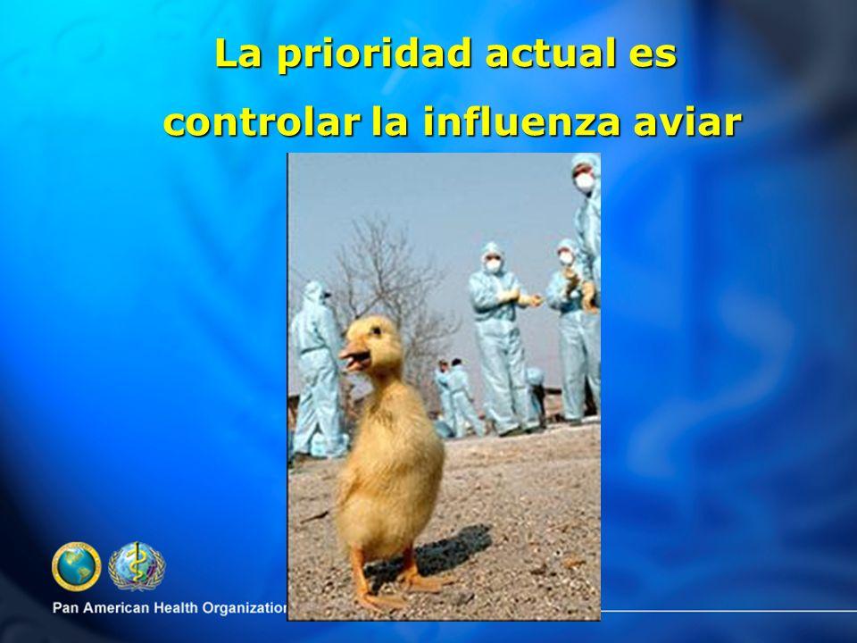 La prioridad actual es controlar la influenza aviar controlar la influenza aviar