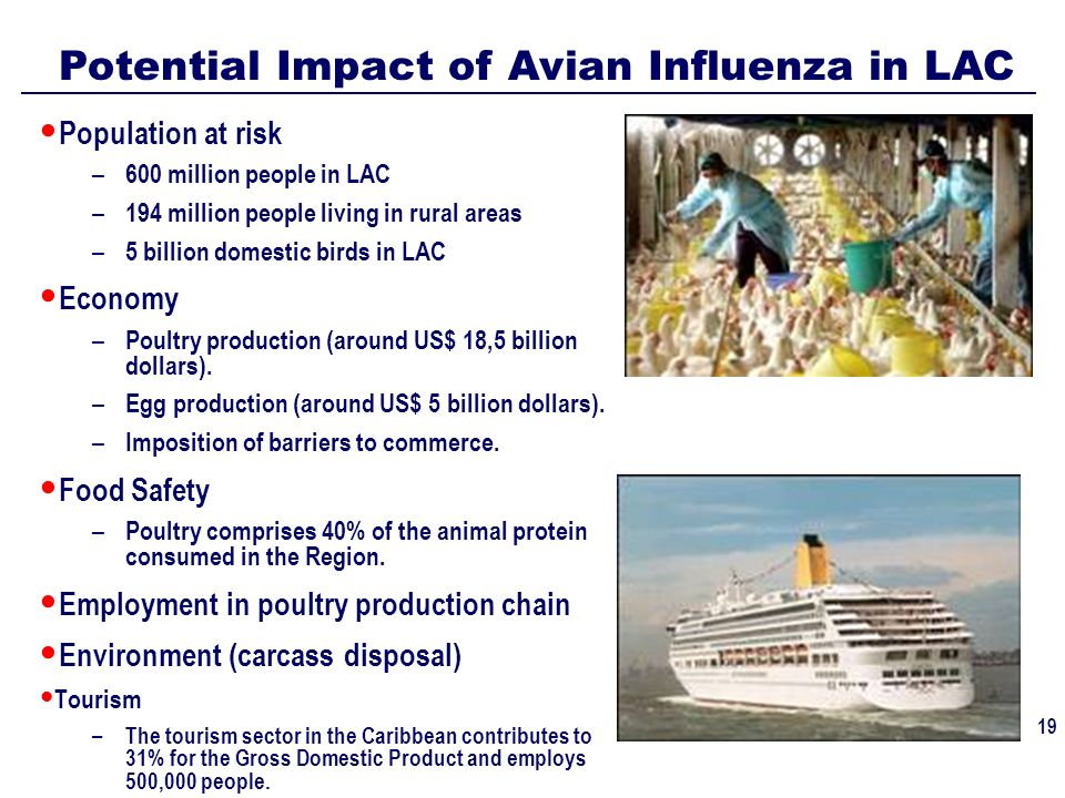 text 19 Potential Impact of Avian Influenza in LAC Population at risk – 600 million people in LAC – 194 million people living in rural areas – 5 billion domestic birds in LAC Economy – Poultry production (around US$ 18,5 billion dollars).