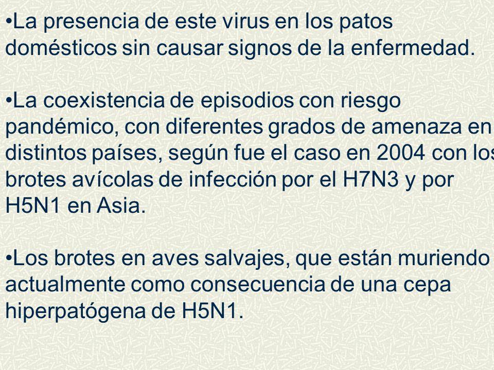 La presencia de este virus en los patos domésticos sin causar signos de la enfermedad. La coexistencia de episodios con riesgo pandémico, con diferent
