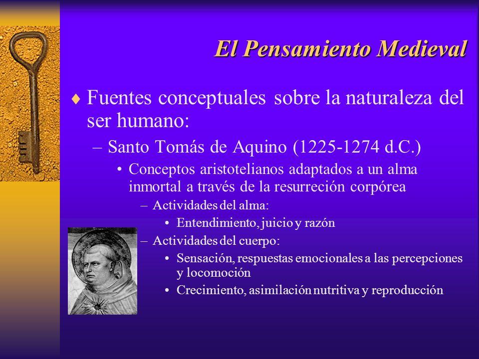 El Pensamiento Medieval Fuentes conceptuales sobre la naturaleza del ser humano: –Santo Tomás de Aquino (1225-1274 d.C.) Conceptos aristotelianos adap