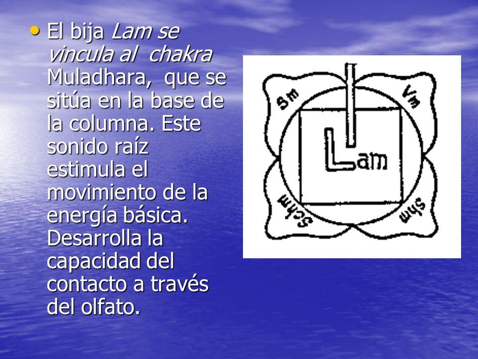 El bija Lam se vincula al chakra Muladhara, que se sitúa en la base de la columna. Este sonido raíz estimula el movimiento de la energía básica. Desar