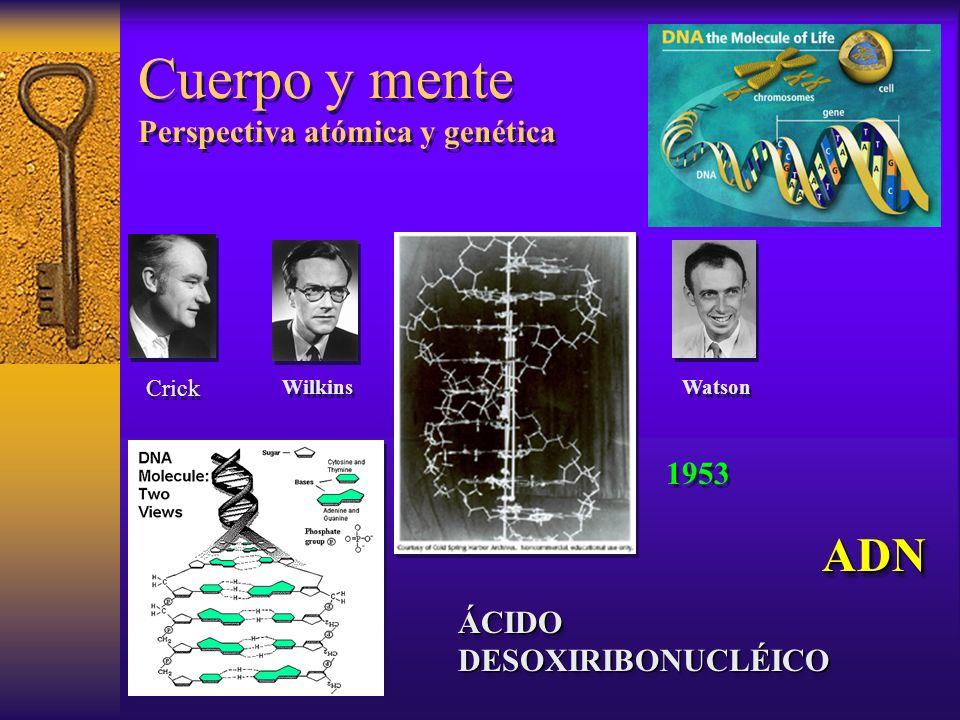 Cuerpo y mente Perspectiva atómica y genética ADN ÁCIDO DESOXIRIBONUCLÉICO ADN Crick Wilkins Watson 1953